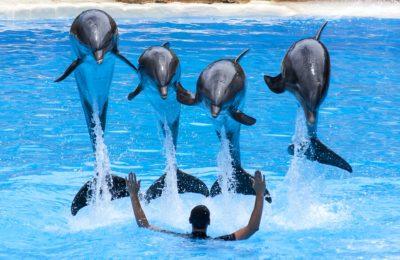 Creek-Dolphin-Show